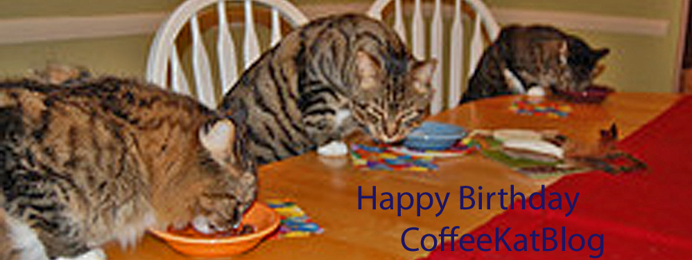 birthday cats, gotjenks, ed_edited-2