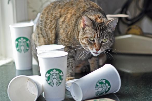 Haz w coffee cups