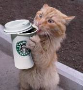 Starbucks cat