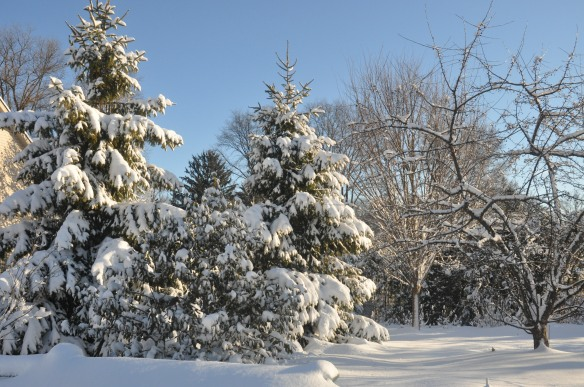 Here is a beautiful snowy backyard.