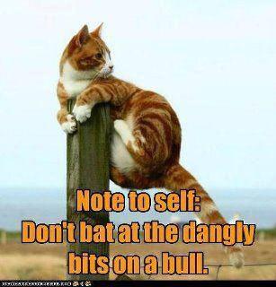 cat on post-bull bits