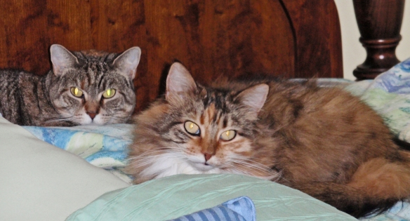 Hazel and Mollie on bed: OMG! I think I heard her. She's flying up the steps. Look like you're sleeping!