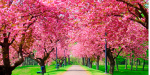 blooming trees-1