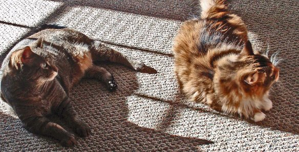 Mollie and Hazel catching rays!