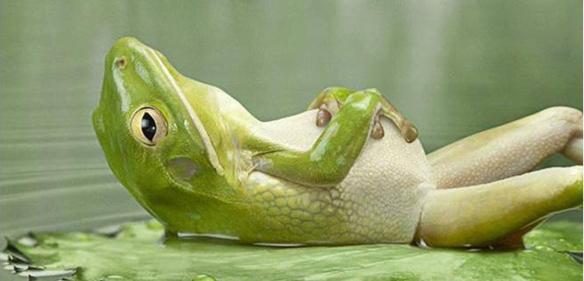 frog on back-ed