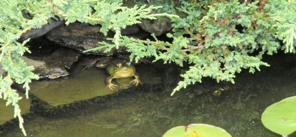 """Campaigning for a """"no frogs left behind"""" policy"""