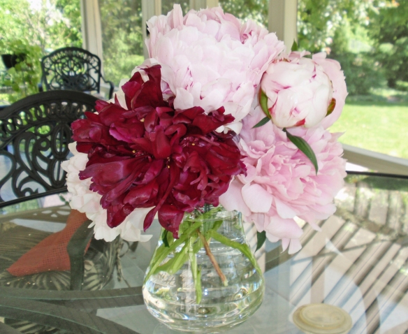 Peonies from my garden
