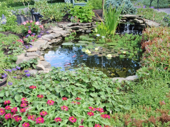 My pond in full bloom!