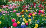 spring flowers-wallpapers111