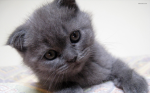 kitten,small from wallpaperest-com