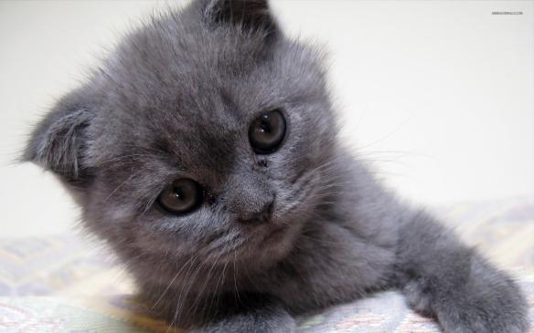 kitten,small from wallpaperest-com