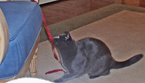 Don't worry! I'll protect you from this marauding ribbon!