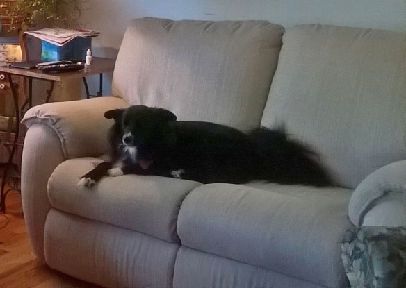 Molly dog enjoying her new sofa