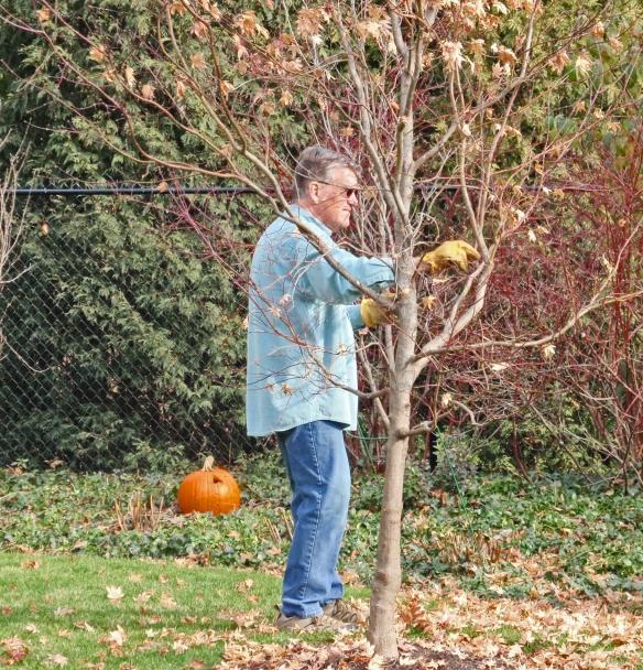 The beloved husband plucking leaves!