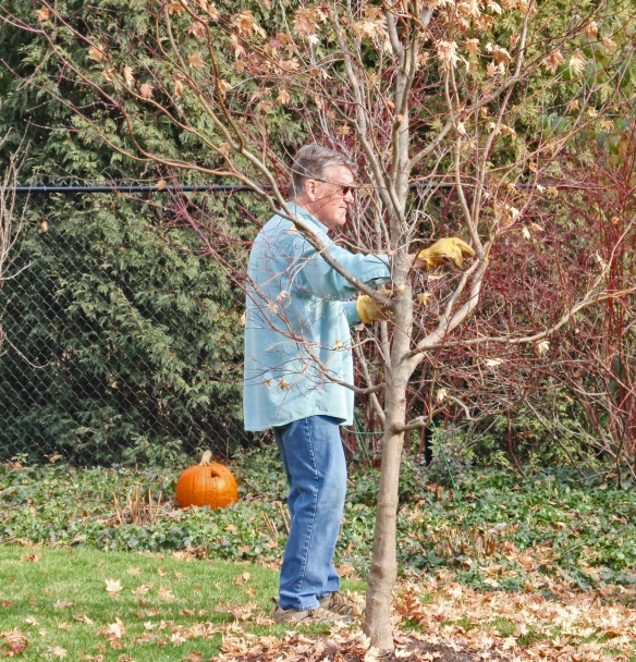 The beloved husband plucking leaves!