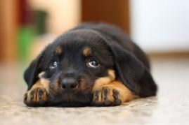 Cuteness not working!