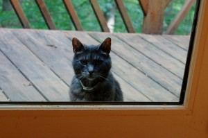 Got catnip? Or bacon? Source: lisaebetz.com (Please note this cat has a nice warm home and is not a stray anymore)