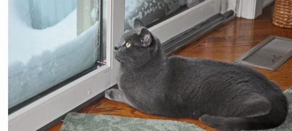Morgan spent most of the day watching the birds outside the sliding doors. I had to remove the snow drift a few times so she could see.
