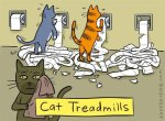 cat exercise-treadmill