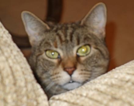 Hazel still hunkering
