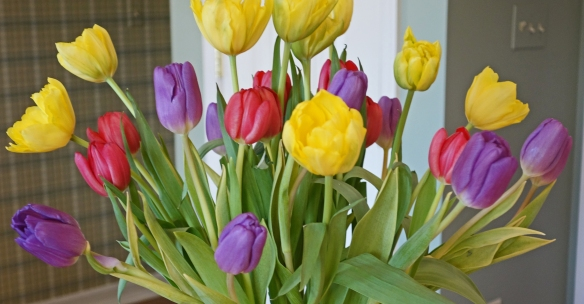 Tulips from the beloved husband!