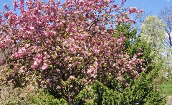 One of our trees blooming prematurely!