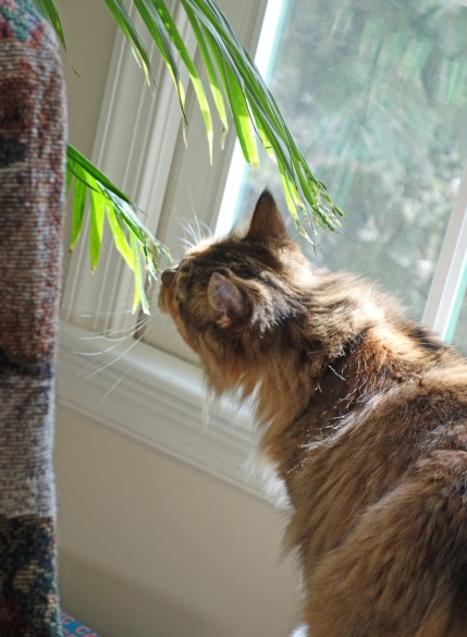 "Mollie chewing on palm fronds: ""They'll think Morgan did this and she'll be in trouble!"""