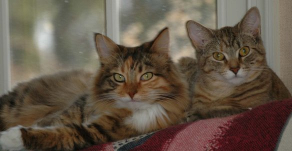 An old photo of besties Mollie (left) and Hazel shortly after adoption.