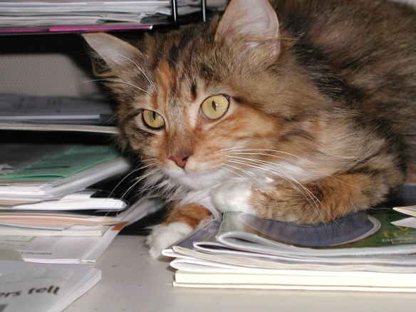 Mollie supervising me while sitting on my desk many years ago.