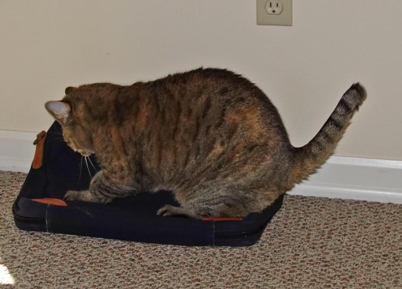 Here is Hazel pummeling my briefcase.