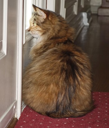 """Mollie: """"The pizza guy isn't here yet. Hope you ordered one with tuna and sardines!"""""""