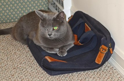 """Morgan """"re-furring"""" my briefcase: """"Honestly I don't know why I can't go to work with you!"""""""