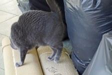 "Morgan carefully inspecting trash: ""Nope! No catnip here!"""