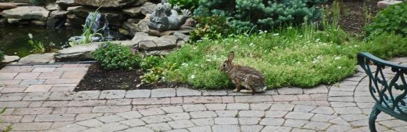 Rabbit was happy too.