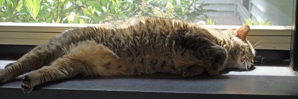 Here is Hazel belly up. She looks kind of like roadkill.