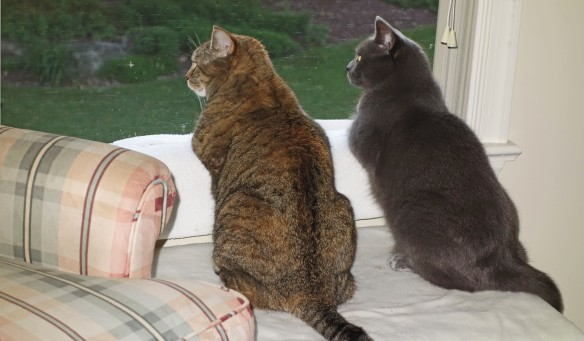 Hazel: Morgan! Did you see that chipmunk?