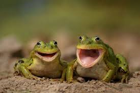frogs-laughing