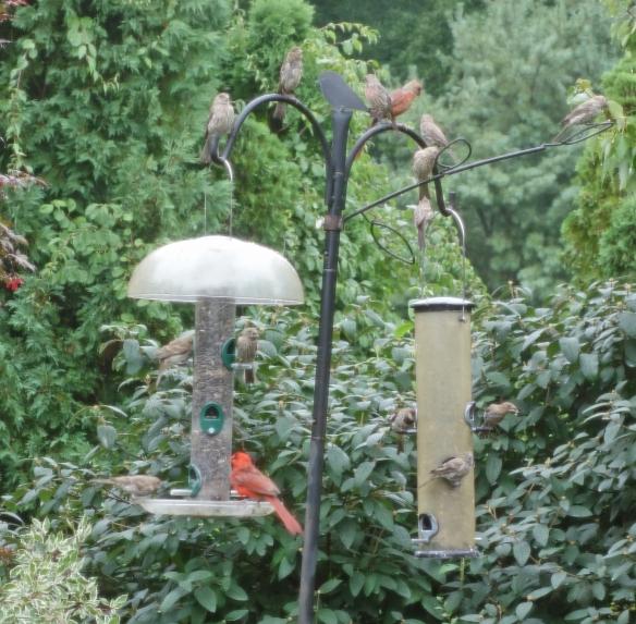 An afternoon at my bird feeder