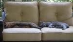 Hazel and Morgan spread out across the porch loveseat