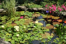 My pond in all its glory!