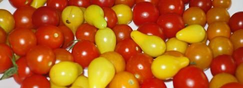 tomatoes-narrow2016