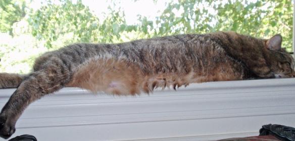 Still loves window sills