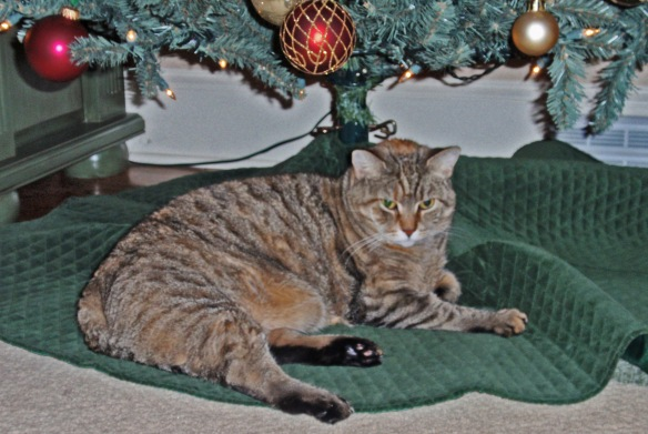 Hazel testing out the tree skirt. She rated it comfy.