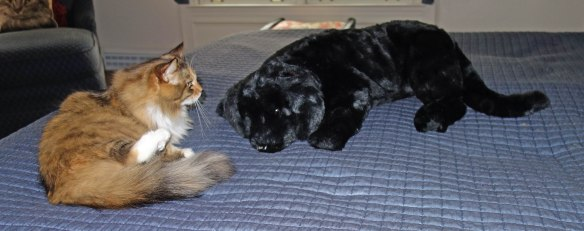 Mollie: Is this thing trained? He's sleeping on my bed!