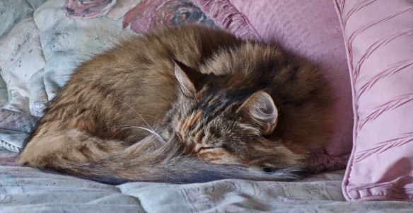 mollie-curled-upsleeping2016