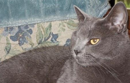 Morgan: I am the good cat this week. No, seriously, I am!