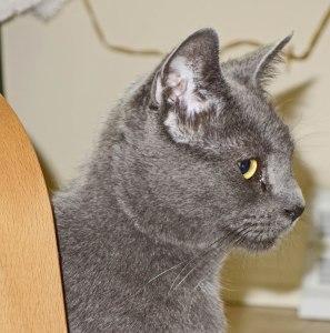new-cat-2017