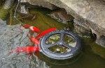 frogs-feb17