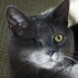 Morgan face close up