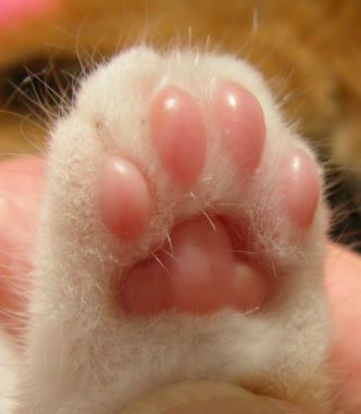This is a good picture of toe beans. Source: I Iz Cat